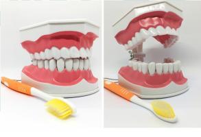 Модель демонстрационная обучающая по уходу за зубами